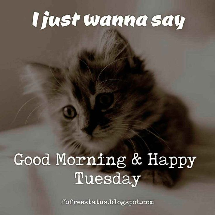 Good Morning Quotes Cat : Best happy wednesday images on pinterest