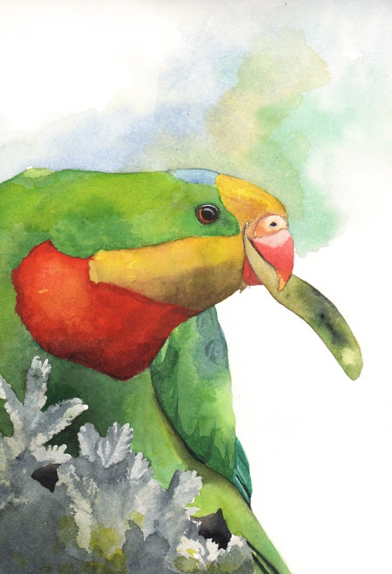 Parrot painting ORIGINAL watercolor painting by Splodgepodge, $90.00