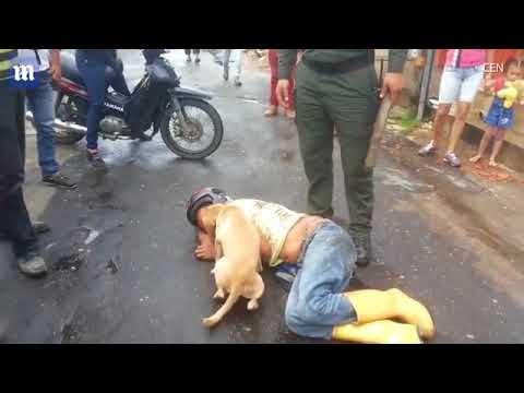 Officially...Archangel641's Blog: Loyal dog protects drunk master!