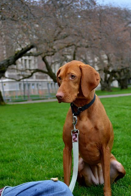 Official List Of Aggressive Dog Breeds