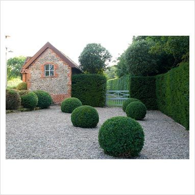 Box balls in gravel with Taxus hedge at Heveningham, Suffolk. Design by Isobel Bilgen. Photo by Zara Napier. Via www.gapphotos.com.