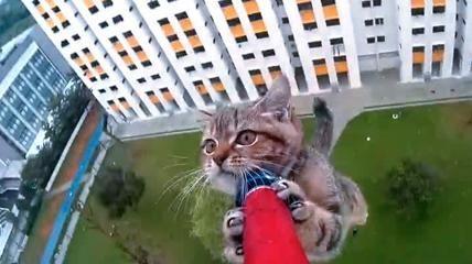 Sul cornicione al 12esimo piano, il difficile salvataggio di un gattino