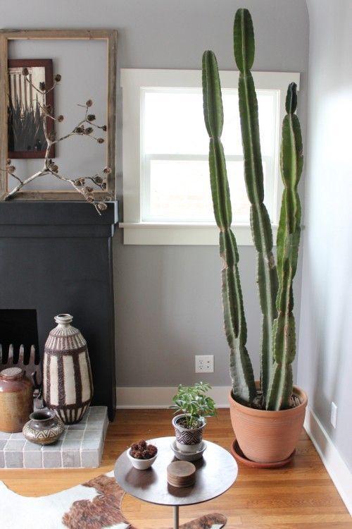 Cactus grande.