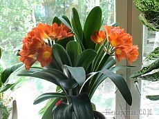 Комнатные растения и тепло