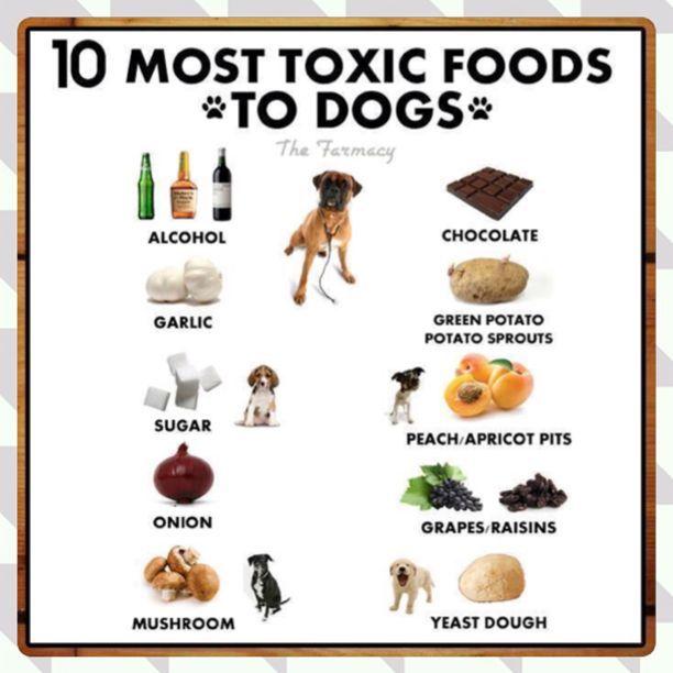 Image Result For Toxic Dog Food List