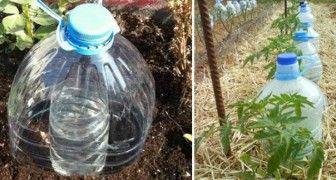 Uma ótima técnica para irrigar as plantas economizando muita água