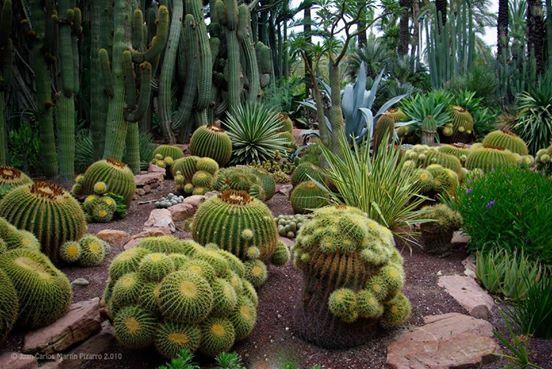 Bello jardin de Cactus