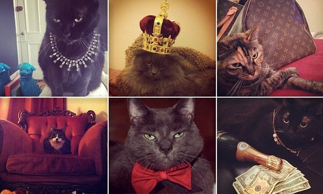 21 Best Cigar Memes Images On Pinterest