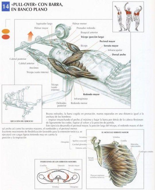 Este movimiento localiza el esfuerzo sobre los pectorales y especialmente sobre los haces claviculares. Forma parte, junto al pull-over, de los ejercicios fundamentales para desarrollar la expansión torácica