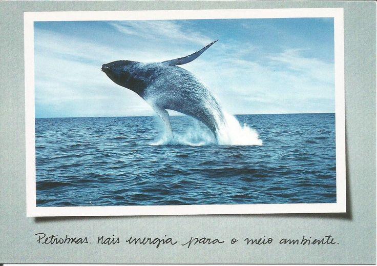 Legenda: Programa Petrobras Ambiental - Projeto Baleia Jubarte Editor: Petrobras & Ministério de Minas e Energia  Impressão: Mica - Circulação: De Guarulhos para Portugal
