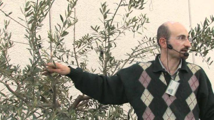 L'olivo (P. Zani) - La fiera di Vita in Campagna