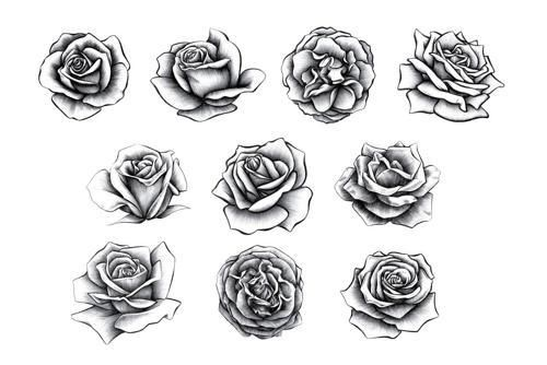 Rose Tattoo Roses Drawing Rose Drawing Tattoo Realistic Rose Tattoo