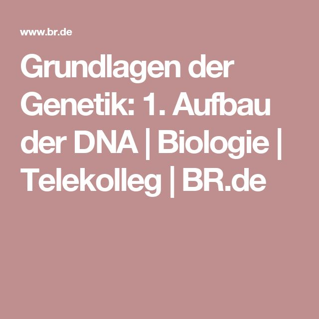 Grundlagen der Genetik: 1. Aufbau der DNA | Biologie | Telekolleg | BR.de