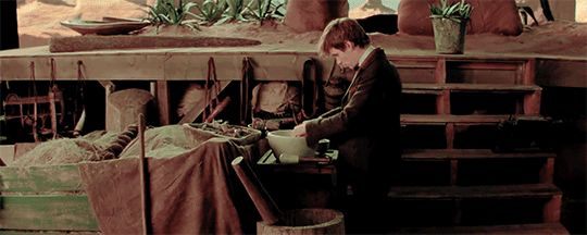 Fantastic Beasts and Where to Find Them Bowtruckle