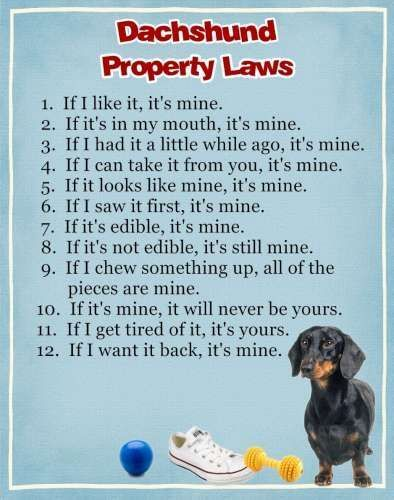 Dachshund Property Laws