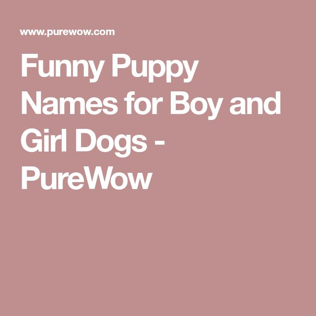 Best 25+ Funny Dog Names Ideas On Pinterest