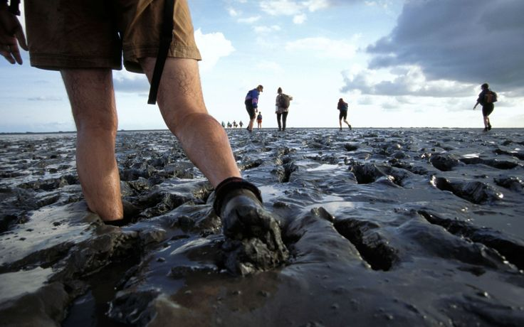 "Netherlands, Wadlopen, ""mud-walking"""