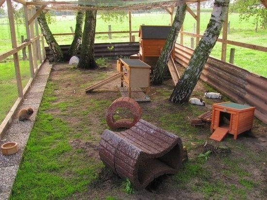 outdoor rabbit care | Outdoor Rabbit Housing - FuzBunz