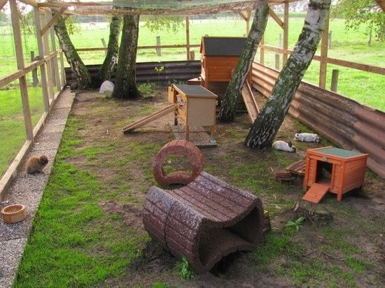 outdoor rabbit care | Outdoor Rabbit Housing - FuzBunz