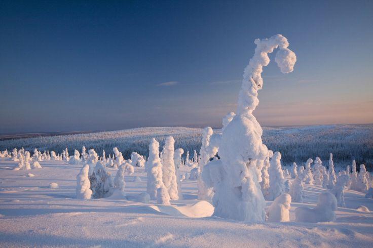 Árvores congeladas, Lapônia