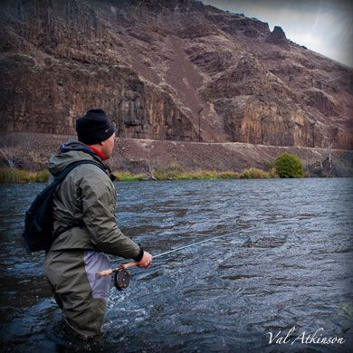 How to fly fish for steelhead.  Although catching a Pacific steelhead on a fly rod is generally a low numbers game, it's not due to the complexity of the fly fishing technique. It's simply due to the fact that there aren't that many steelhead to catch to begin with. You might also find it surprising to hear that the most common technique used for steelhead is actually quite easy...even easier than trout fishing.