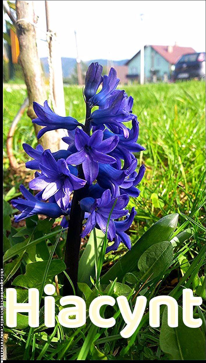 Kwiaty Wiosna Flowers Garden Spring Hiacynt Kwiaty Flowers Polish Flowers Polskie Kwiat In 2020 Diy Succulent Terrarium Flower Garden Succulent Terrarium