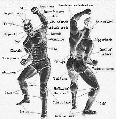 Pressure Points. Get to know your nerves, and you can use this to your advantage when taken to the ground or grappled. Push on certain points on a body can disable an arm from being used or pushing on a place in your body can give you the heightened strength you need to get out of a situation. Krav Maga uses nerve endings because they are key to surviving