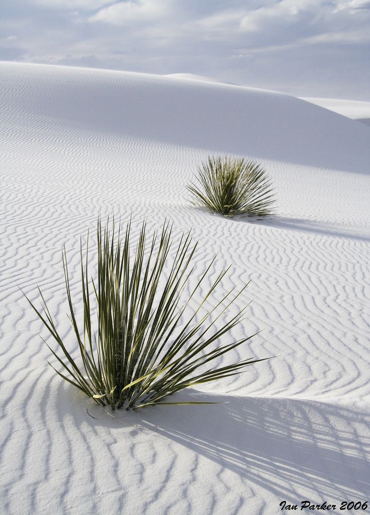 White Sands, New Mexico ... | albuquerque | Pinterest | Places, White sands national monument and Nature