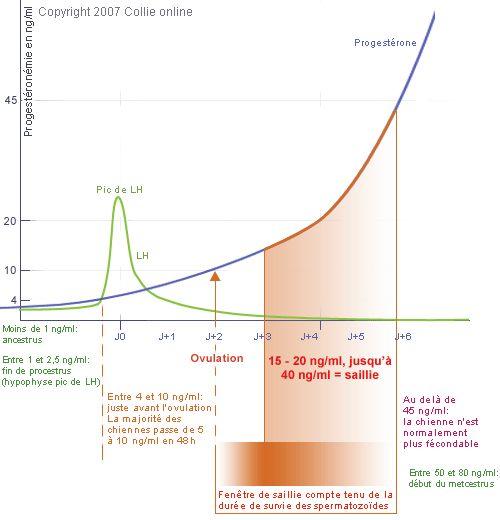 Progestéronémie.      Moins de 1 ng/ml = anœstrus     Entre 1 et 2,5 ng/ml = fin de proœstrus (hypophyse Þ pic de LH)     Entre 4 et 10 ng/ml = juste avant l'ovulation     10 ng/ml = ovulation (la majorité des chiennes passe de 5 à 10 ng/ml en 48h)     15 – 20 ng/ml = saillie     45 ng/ml la chienne n'est normalement plus fécondable     Entre 50 et 80 ng/ml = début du metœstrus      § Si ovulation précoce : progestéronémie passe de 5 à 50 ng/ml en moins de 4 jours      § Si ovulation tardive…