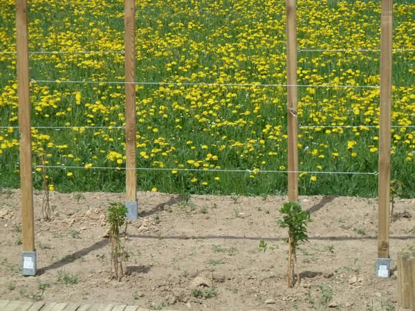 Kletterhilfe Fur Rosen Selber Bauen Google Search Gartenspaliere Spalier Garten