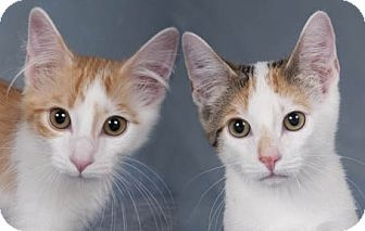 These adorable kittens would love a new home together!: New Home, Pet