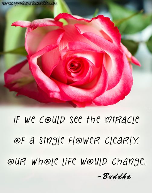 Quotes about life: If we could see the miracle of a single flower clearly, our whole life would change?