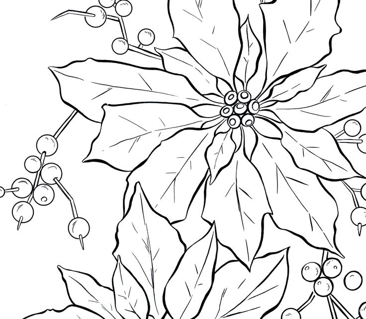 Poinsettia Line Art Christmas Cards For Others