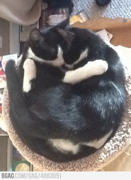 Keeping warm: Funny Picture Quotes, Cute Animal, Tuxedos Cat, Warm, Tuxedo Cats, Funny Cats, Funny Pictures Quotes, Cat Love, Animal Funny
