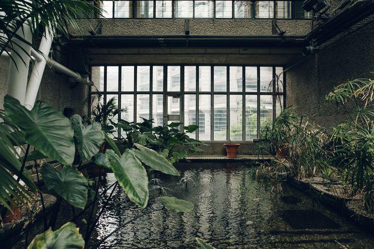 Haarkon Barbican Conservatory Greenhouse Glasshouse jungle plants green london travel concrete architecture water pond carp