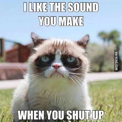 sounds of silence, grumpy cat
