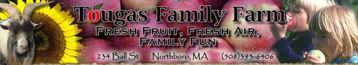Honeycrisp Apple Picking, Pumpkins and Family Fun at Tougas Family Farm, Metrowest Massachusetts