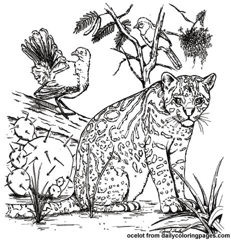 south america animals coloring pages texas ocelot animal coloring pages - Baby Arctic Animals Coloring Pages