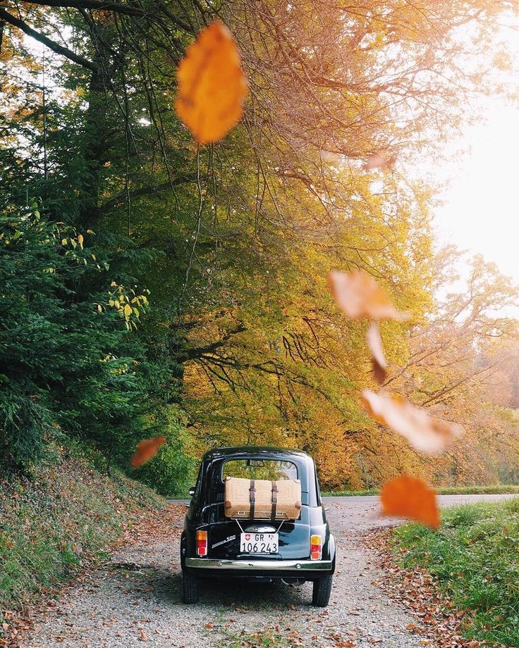 Fall on @kitkat_fiat500. . Don't miss out my takeover at @helvetic.collective by kitkat_ch