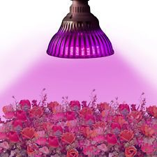 Solutions For Question About Ebay Led Grow Lights | best ebay led grow lights, cheap ebay led grow lights, do ebay led grow lights work, ebay cob led grow light, ebay led grow lights, ebay led grow lights any good, ebay led grow lights review, ebay uk led grow lights, ebay.co.uk led grow lights, good ebay led grow lights