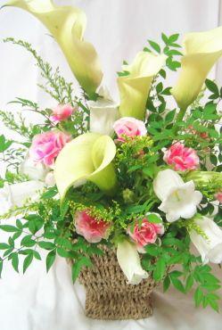 カラーとピンクカーネーションのアレンジメント。お供えでも華やかなお花を贈りたいときに。