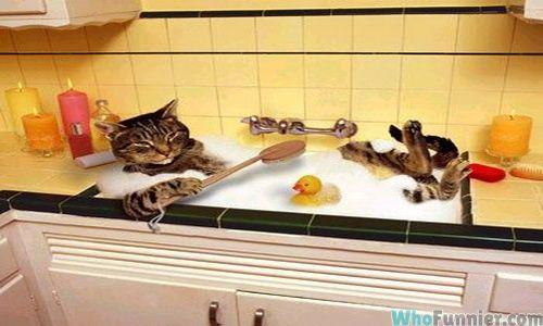 cats_X.jpg