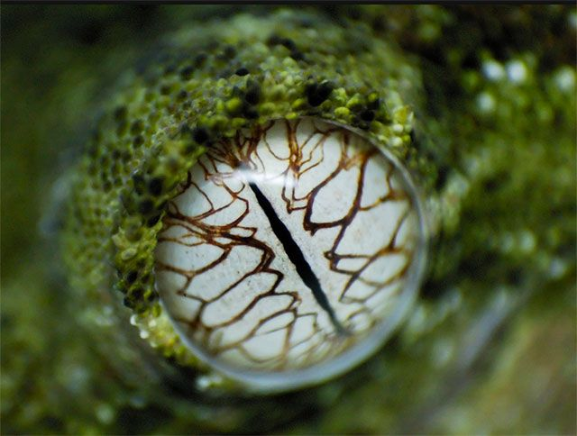 25 of the most amazing (and colorful) animal eyes i've ever seen - Blog of Francesco Mugnai