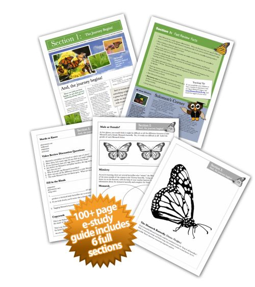 ACE Study Guide | Entomological Society of America