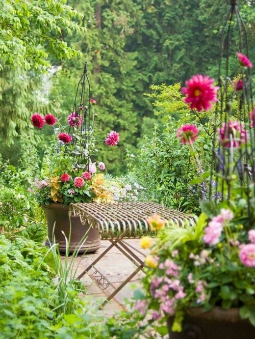 so going to do this next year Dahlias in huge pots