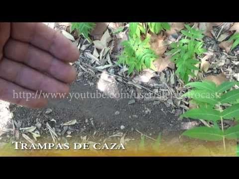 Trampa para conejos - YouTube