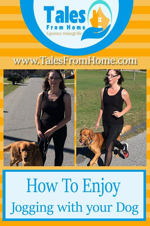 The Top 5 Tips On How To Enjoy Running With Your Dog Your Dog