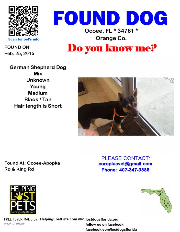 32 best Lost Dogs Florida! images on Pinterest Lost, Chihuahuas - lost dog flyer examples