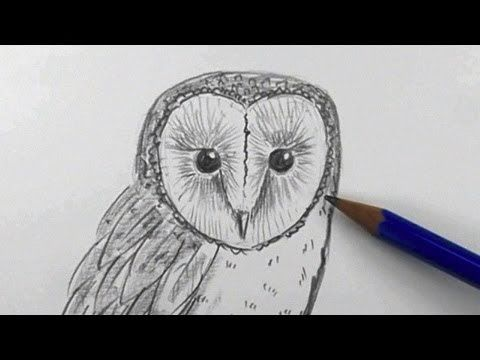 how to draw a barn owl easy