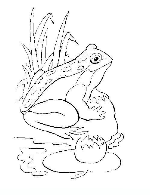 1000 images about Color Amphibians Reptiles on